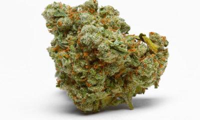 Marijuana stash