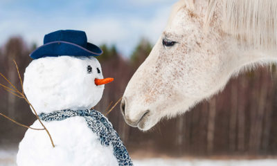 Horses with snowman