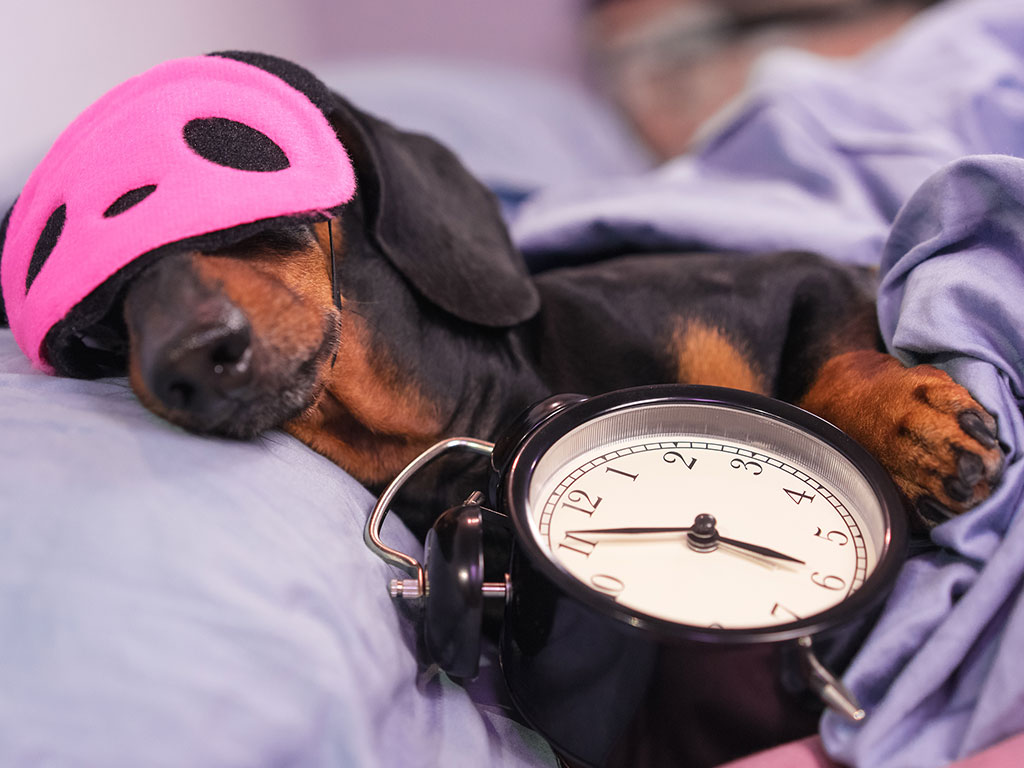 Doggie needs help with time management