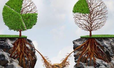 Trees living in codependency
