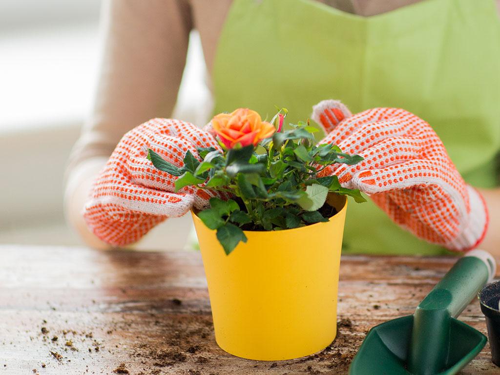 Gardening to heal