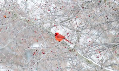 Serenity - calm Winter scene