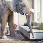 Elephant in babys room