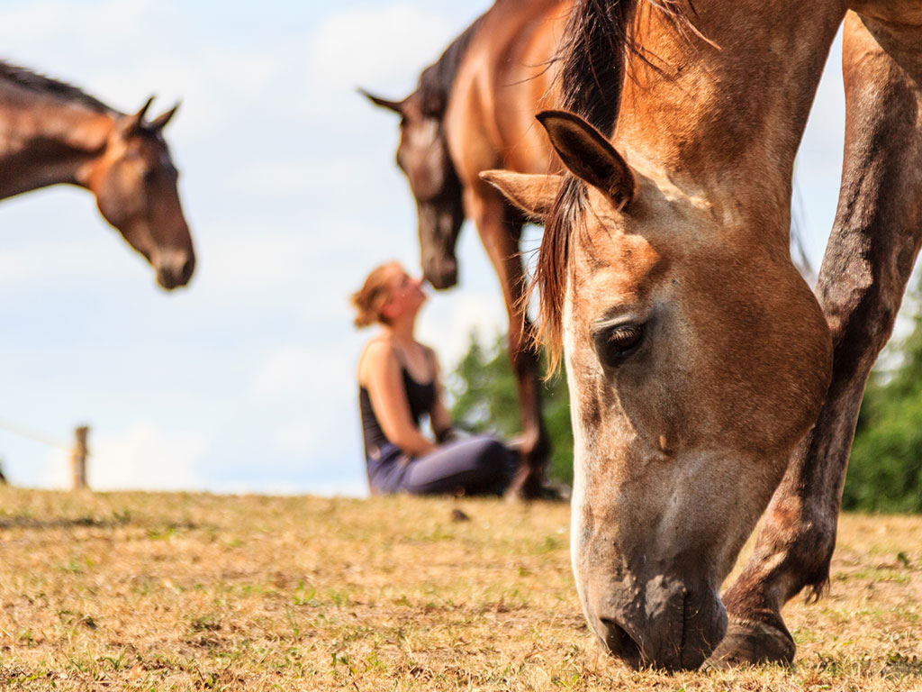 honesty in recovery with equine therapy