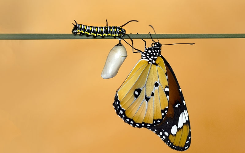 caterpillar turning to butterfly is the recovery transformation