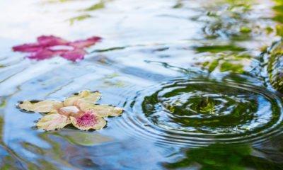 Serenity in spring pond