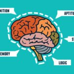 graphic of brain functions