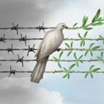 Dove putting branches on barbed wire
