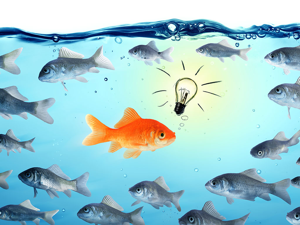 Goldfish with bright idea