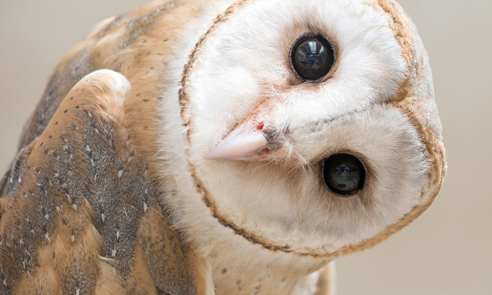 Owl wonders what is SMART recovery?