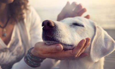 Gratitude for pet