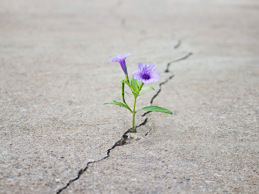 hope flowergrowinginconcrete