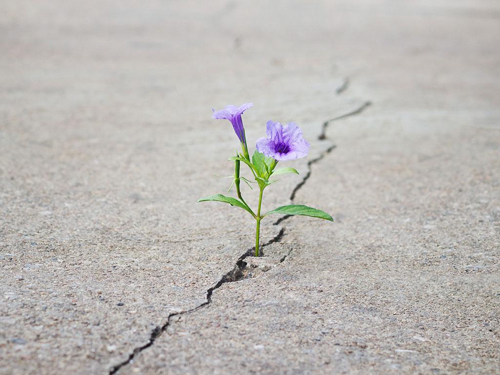 hope - flower growing in concrete