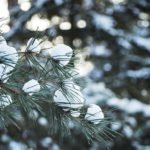 Winter tree with snow