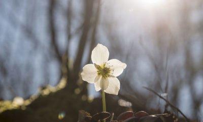 New spring flower