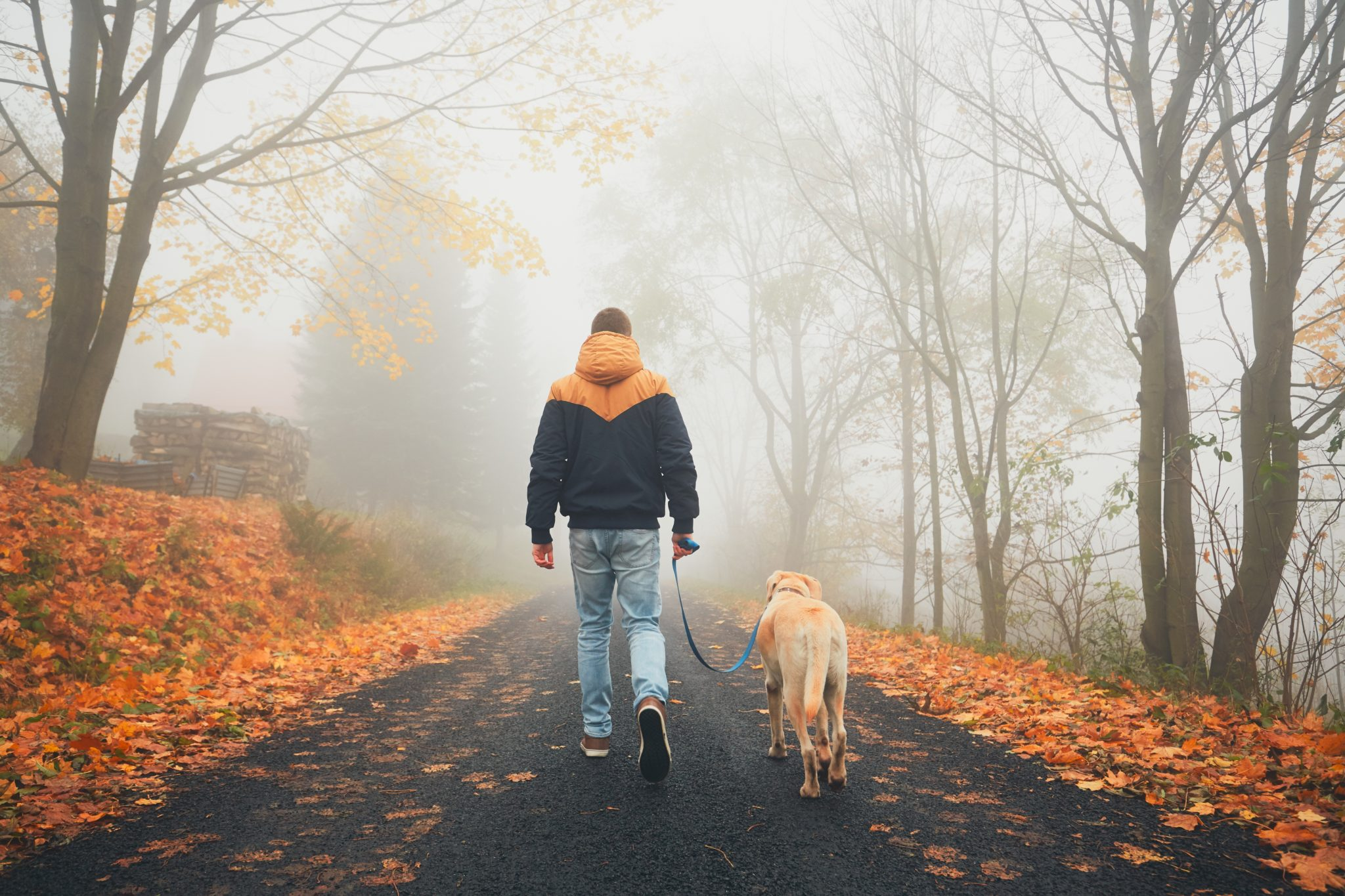 I Traded The 12-Step Program For A Dog  –
