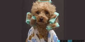 dog in bathrobe