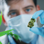 medical marijuana versus pot