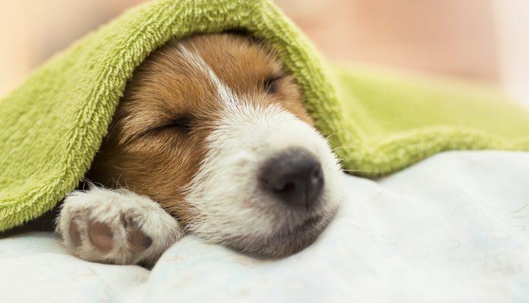 healthy sleep in 7 steps Cadobe