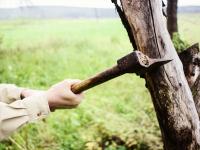 Detaching with an ax