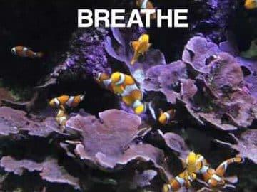 Mini Mind Break Clownfish