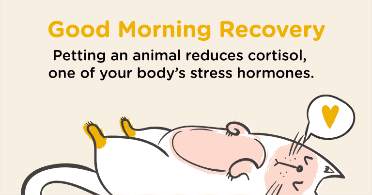 Good Morning Recovery Animal