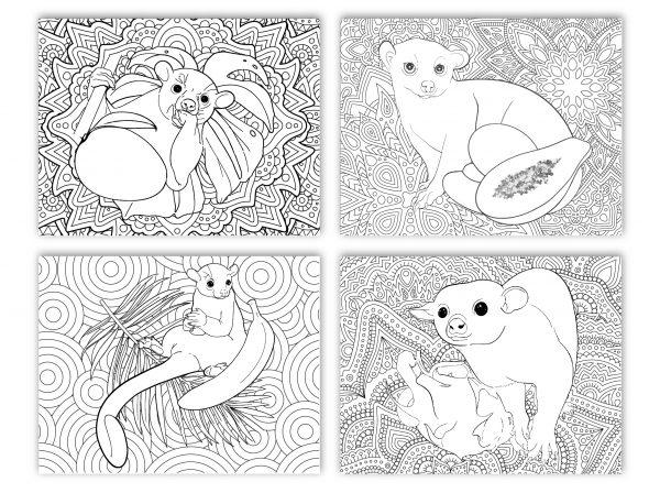 Kinkajou coloring pages