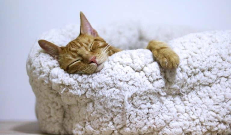 Healthy Sleep Quiz