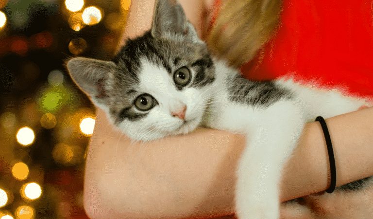Can Your Cat Tell If You Are Depressed?